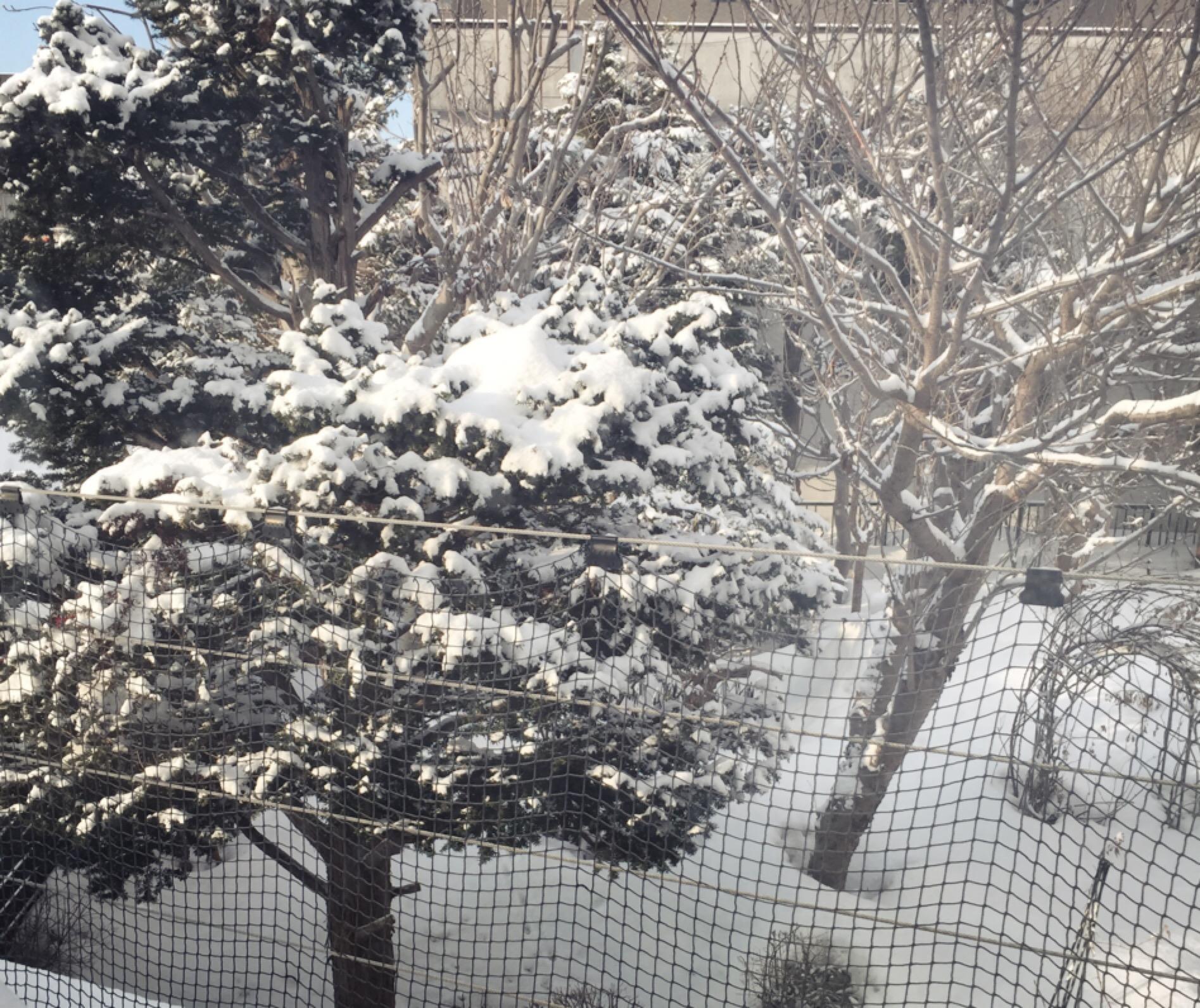 またまた、雪が、、、