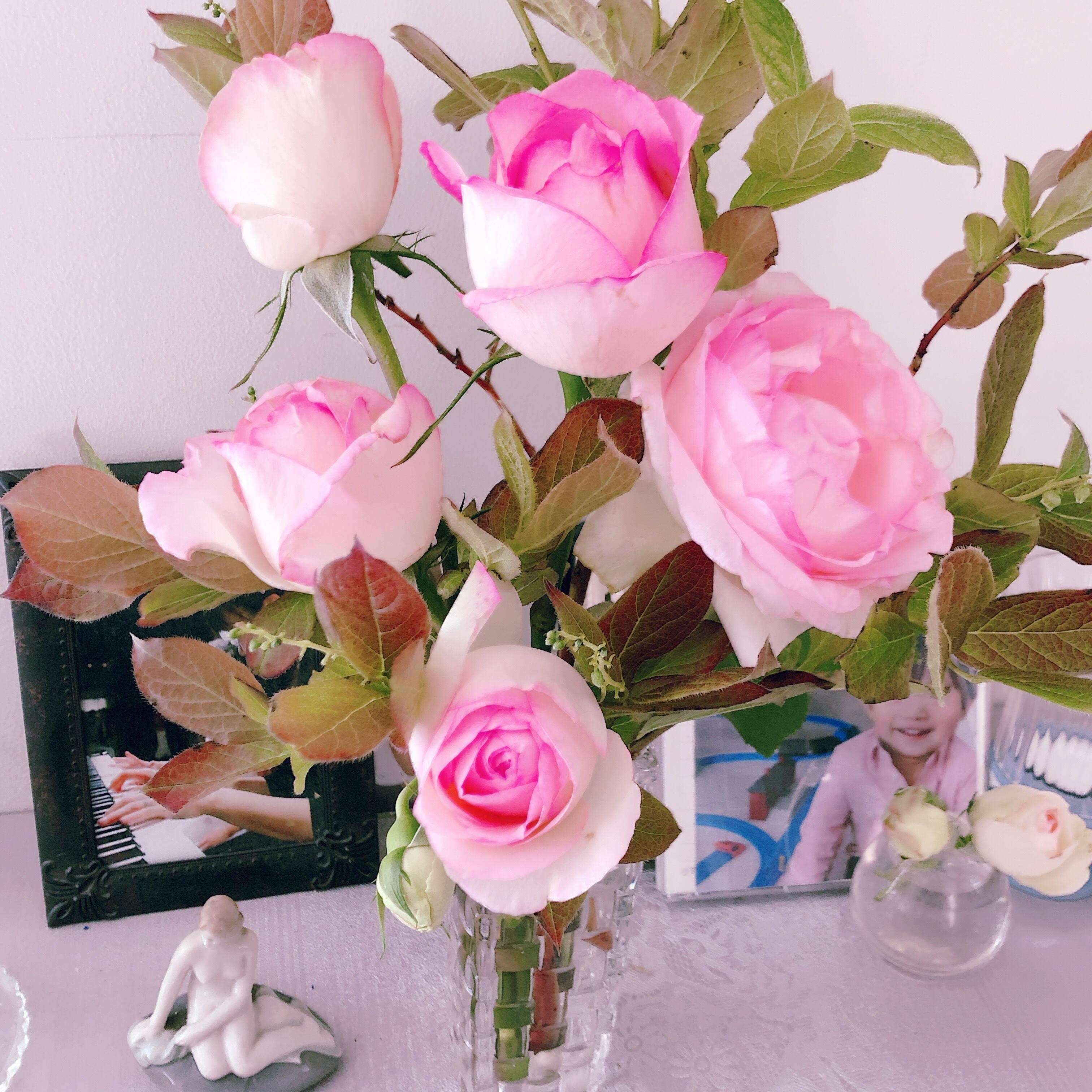 バラの季節ですね